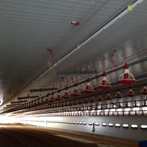 Equipamiento Granja Avícola en Villamalea (Albacete)