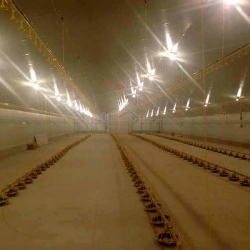 Granja Avícola Llave en Mano en Quintanar del Rey (Cuenca)