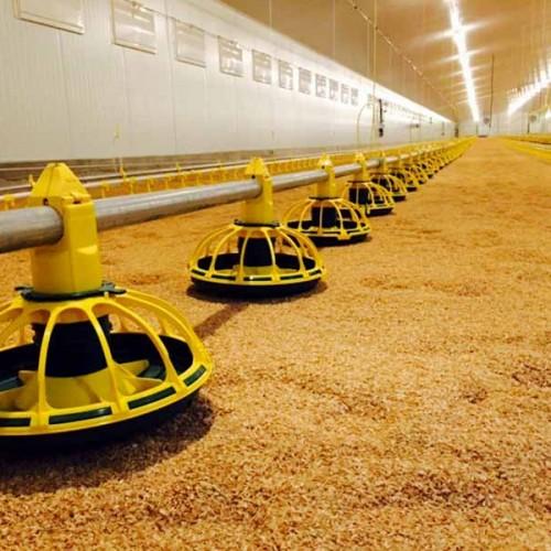 Granja Avícola de Pollos de Engorde Llave en Mano en El Robledo (Albacete)