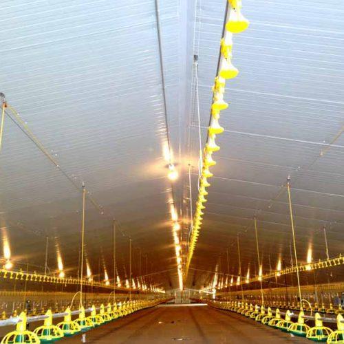 Núcleo Avícola «La Carrasquilla» en Los Corrales – Utiel