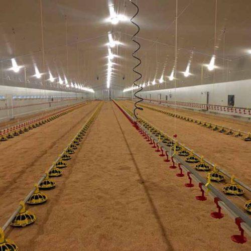 Explotación Avícola para Engorde de Pollos en Villamalea (Albacete)