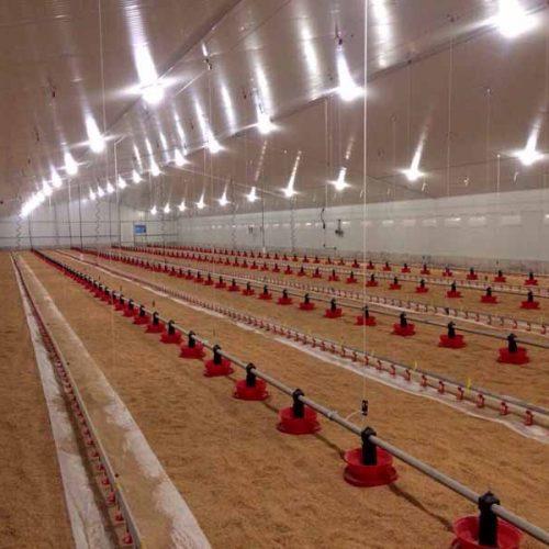 Explotación Avícola llave en mano en Benamaurel (Granada)