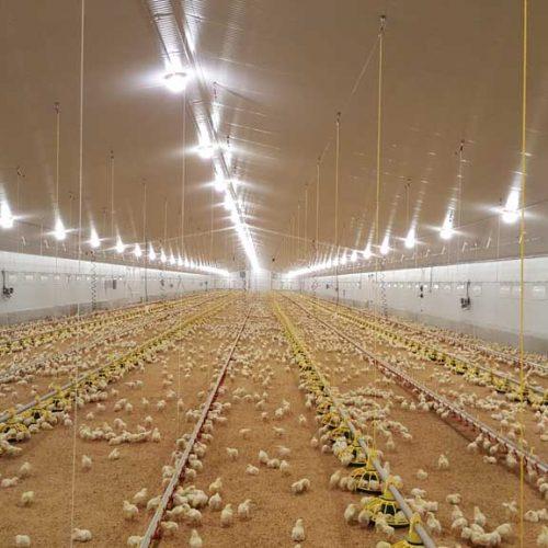 Granja Avícola para Engorde de Pollos en Ledaña 2 (Cuenca)